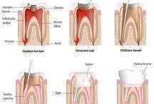 Dental procedures / Facts about dental procedures