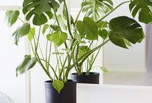 plantas para decoração do meu lar.