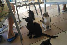 zakintos cats