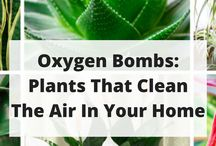 Plants that clean the air in your home