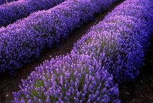 Inspirational images of herbs and herb gardens