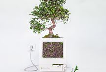 Plant your Mac!