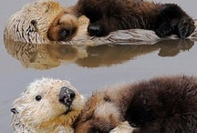 Otter love / otters
