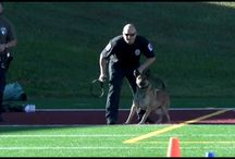 "K9s4COPS ""Hard Dog Fast Dog"" / The fastest K9s4COPS dogs with the biggest bites"