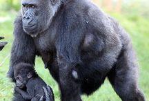Monkey Monkey World 2.