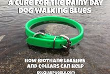 Rainy Day Dogs: How to Deal with a Wet Mutt