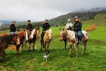 River Valley Horse Adventures / At River Valley we use natural horsemanship techniques to ride our horses. We have stunning farmland and bush to ride in and breath taking views so come on down to River Valley Stable to see what its all about