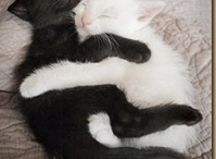 Black & White Cats