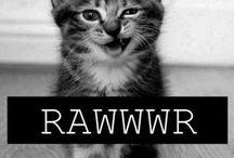 Kut Kat / Cute cats