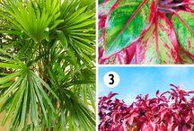 растения в доме и в контейнерах