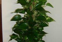 trucos para plantas !!