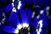 Flowers ......4 u Freinds / For my Eyes & my Soul.