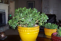My Green Thumb / My landscaping projects & my favorite indoor plants...JADES!!! / by Kathy Logan