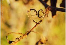 Quand la Nature aime