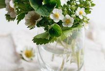 Pretty Plants & Florals
