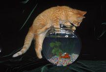 Il mondo degli animali / Come e perché apprendere il rispetto per il mondo animale