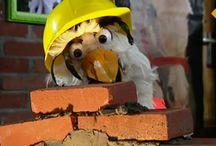 Thema bouwen - onderwijs / Kleuters: Thema bouwen, huis en thuis #kleuters #onderwijs