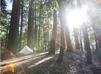 Let's go play in the Woods: Camping / Photos of camping