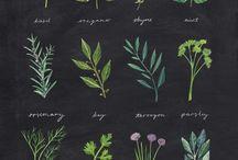 Botanic / by Liesl Gibson