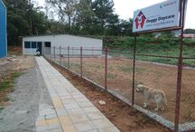 Doggy daycare Bangalore / Dog boarding and daycare