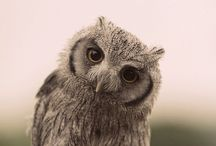 Rachel loves owls / by Kandi Williamson