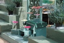 RHS Chelsea Flower Show 2015 / The Whetman Pinks display in the Great Pavilion GPB3 2015