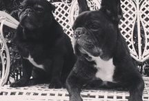 Space NK Pampered Pets / Meet some of our brand founder's dogs…