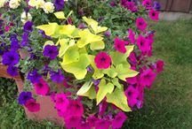 JJ's Acres Flower Combos / Annual Container and Basket Combinations