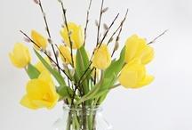 Kevät fiiliksiä