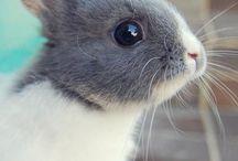 Bunnies <3!