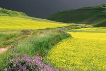 Flower feilds, flowery meadows, wild flowers (virágos mezők, virágos rétek, vadvirágok) / Vadvirágok