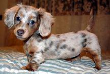 Dog - someday.