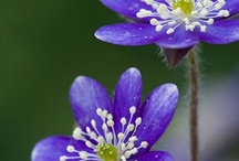 Blombilder