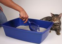 CAT Tips / Cat owners have questions about their cats' behavior. We have answers. Find some here (and more at www.catadoptionteam.org/tips)  / by Cat Adoption