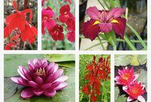 Pond Plant Offers