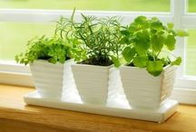 Indoor Plants / by Divya Silbermann (Bhaskaran)