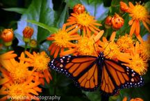 Butterflies / by Debe Eberitzsch