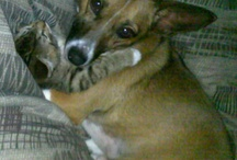 Gotta love the pets / by Jennifer Strong