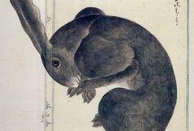 本草図説「アナウサギ」 高木春山