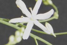 Idées de fleurs