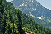 Our Neck of the Woods / There is so much to do in American Fork and in surrounding areas, here is some of what we love.