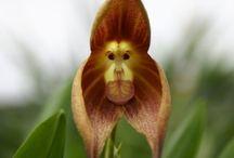 たのしい植物