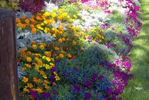 annuals beds
