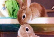 Animais Fofinhos / Imagens de animais