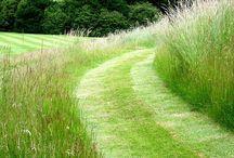 #grasses