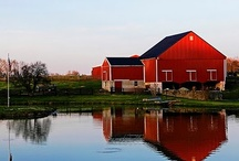 Barn And Animals / by Laurel Plumer
