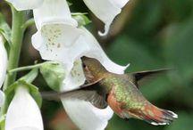 birds,blooms, & butterflies