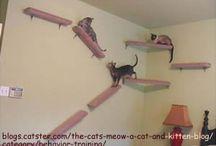 Animales casa cuki