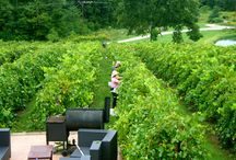 Vignoles 2014 Harvest / We're picking!