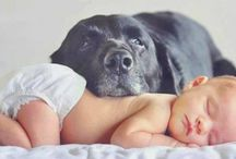 baby with pet